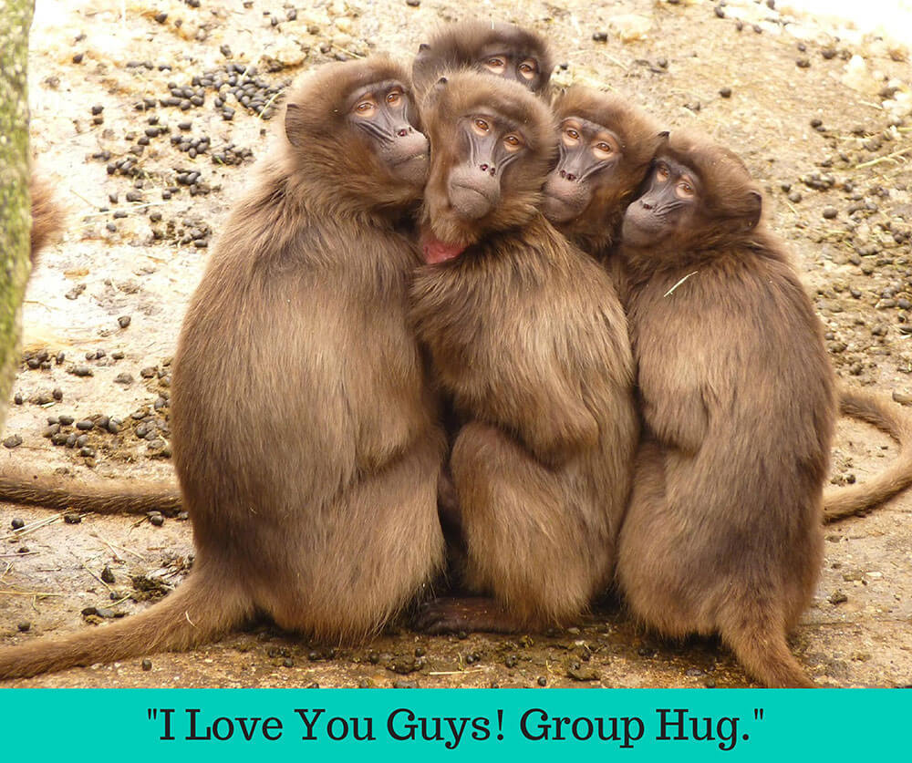hugging-monkeys